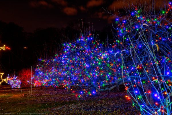 Holiday Lights for Park
