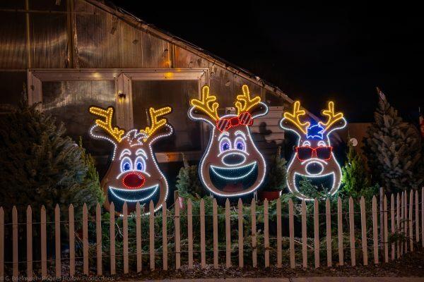 Reindeer Holiday Displays