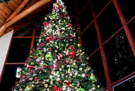 Christmas Tree Displays