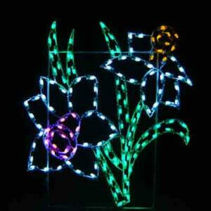 DAFFODIL FLOWER CLUSTER